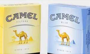 Сигареты Кэмел 3 лучших вида